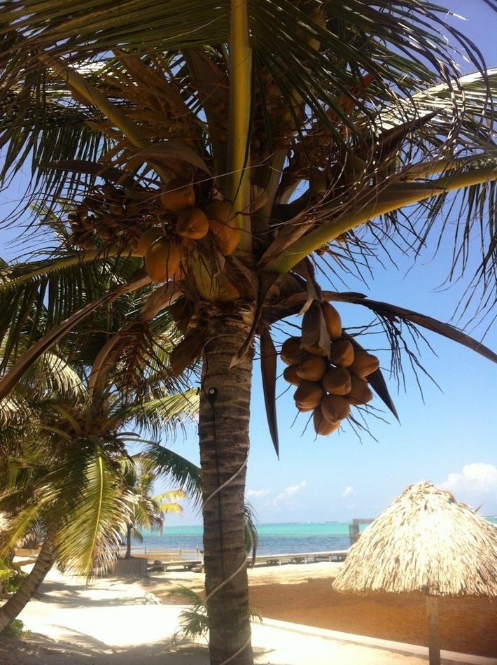 Belize TDLL Show - 48