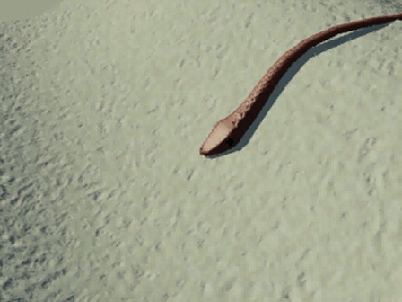 Snake Final