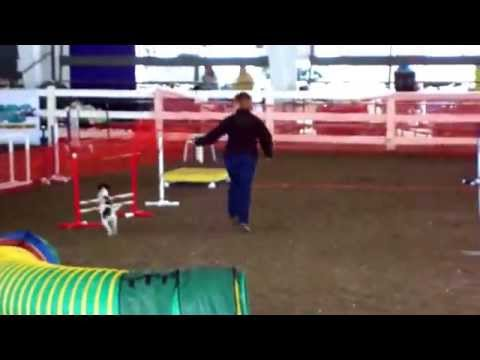 Maine Dog Show Event ( Part-16 )