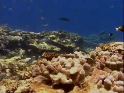Treasures of the Great Barrier Reef - PBS (1995)
