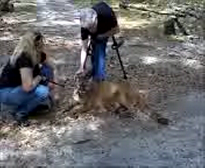 STONEY AND KEISHA THE FLORIDA PANTHER, < www.thecarefoundation.org >