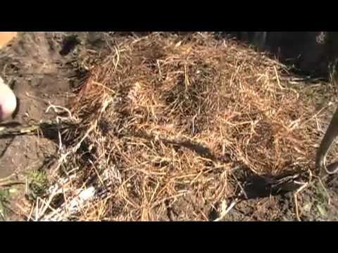Survival Gardening 15, survival, homesteading, survivalist food storage emergency preparedness