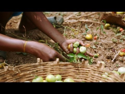 Feeding 9 Billion: Seeds of Change - India