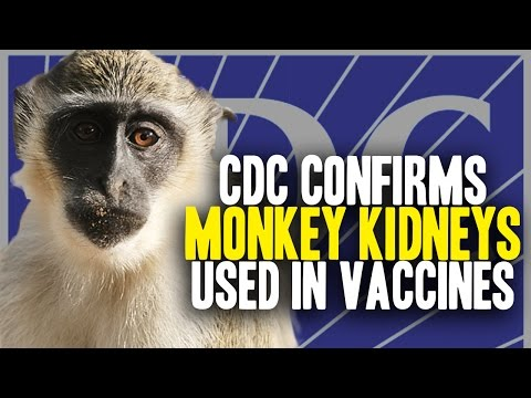 CDC confirms diseased monkey kidney cells used in vaccines