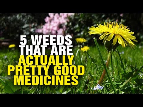 5 weeds that are actually pretty good medicines