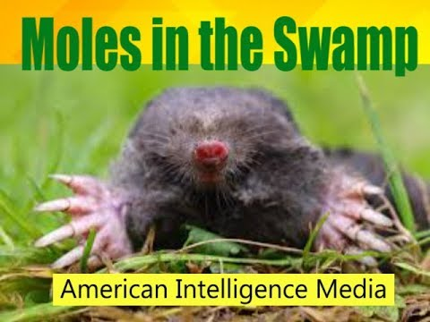 Moles Unplug Hole in the Swamp