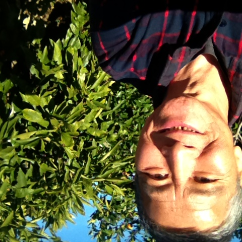 Me in front of a kumquat tree on 21July,on my property