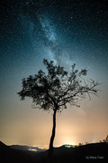 A tree in the night 1
