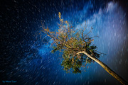 A tree in the night 2