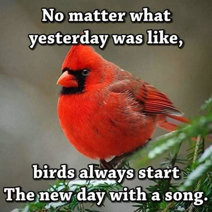 Birds start the day with a song