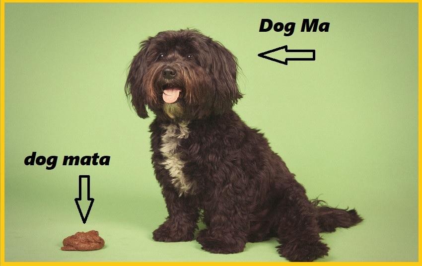 000 dogmata