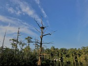 Ospreys Were Mad When I Fished By Their Nest......