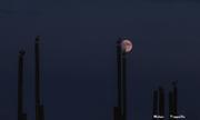 Luna sui Gabbiani