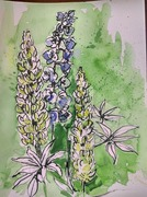 Lupins and Delphinium