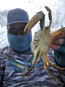 Albemarle Blue Crabs