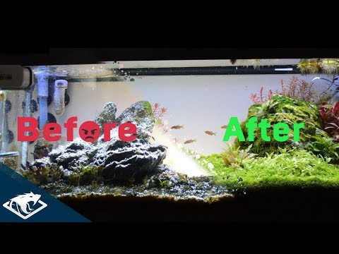 FAILURE IS NOT AN OPTION | Iwagumi Aquascape - Part 3