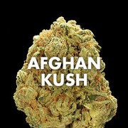 Buy Afghan-kush Online