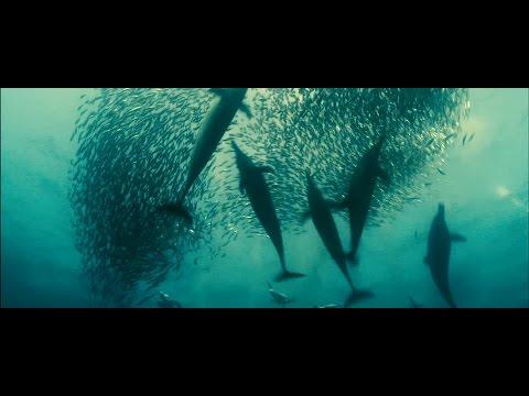 Жизнь в океане (Oceans)