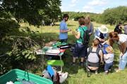 Family Bug Hunt - Alexandra Park - Sep 7th - 1:30 - 2:30pm