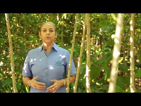 Sistemas Agroflorestais  para recuperação de áreas degradadas