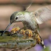 Balance en la naturaleza