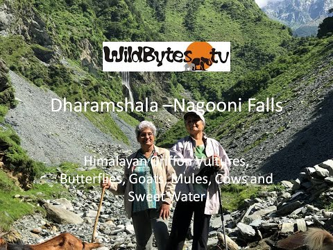 Dharamshala Nagooni Falls, Himachal Pradesh