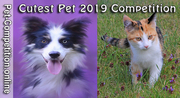 ART and PHOTOGRAPHY CALL: CUTEST PET 2019 - SUPPORT HOMELESS ANIMALS