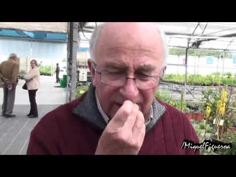 Llantén  la planta para piel, intestino y pulmones con Josep Pàmies