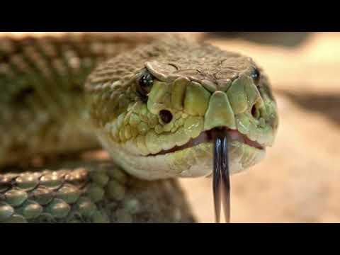 (407) 915-3963 - Wildlife removal Orlando