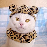 Coldy Cat