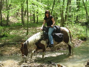 Saddle comfort for horse and rider – Tennessee Trail Riders