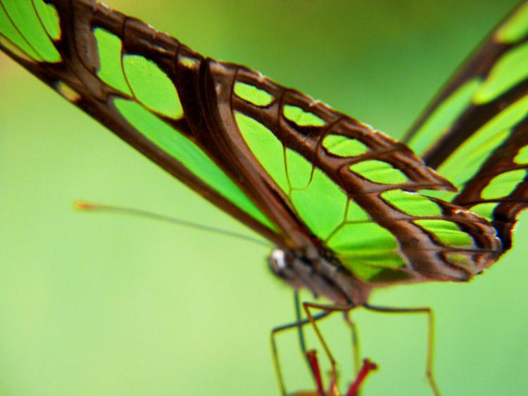 Acervo Mariposa