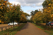 Autumn Tree Walk