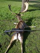 seis-calibres-top-para-cazar-venados-y-gamos-armas-y-cartucheria