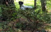 Il est au pied de l'arbre le bougre !