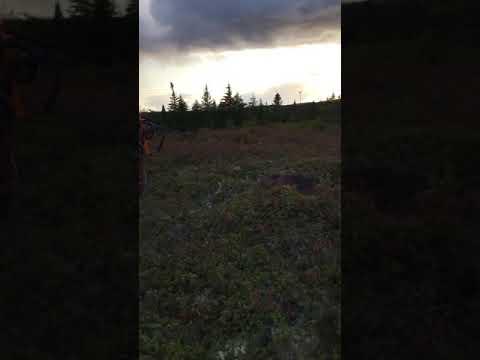 Moose Hunting in Newfoundland,  finisher.