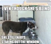 Mean Spirited Humorous Meme