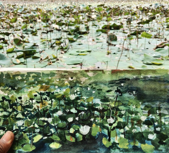 Lilly Pond @ palikarnai