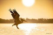 Bright flight