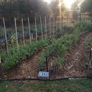 Postponded date TBC: LFG Garden Visit to Doreen and Jamies