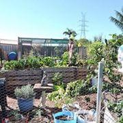 Higgledy-Piggledy Urban Farm