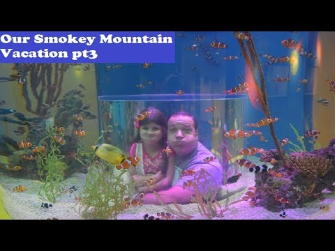 Wes Iseli's Magiclife #206 (Our Smokey Mountain Vacation pt3)