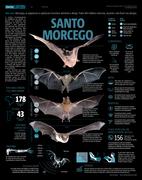 Santo Morcego - Metro 2019