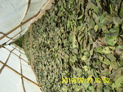 Marquesina solar IMG_0402