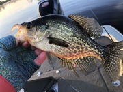 Most Of The Crappie Were This Size
