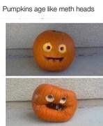 Meth pumpkins