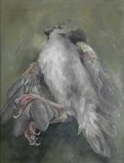 Birds - South Africa