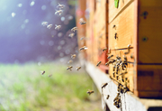 Logan City Council Libraries event: How to start beekeeping