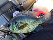 Sunfish in November...
