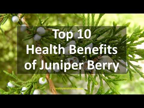 Top 10 Health Benefits of  Juniper berry - Healthy Wealthy Tips